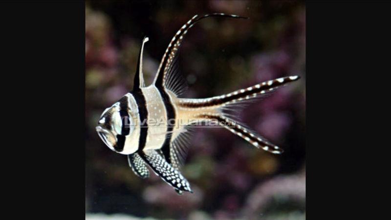 Conseil achat poisson  Image15