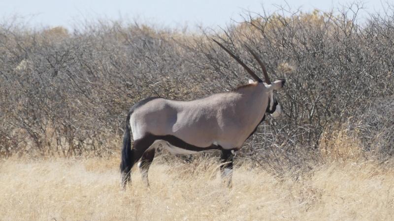 Namibie Août 2016 P1090612
