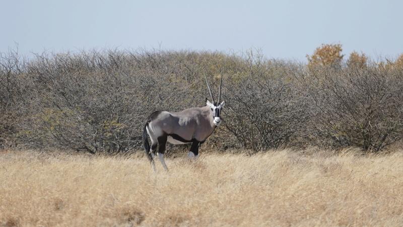 Namibie Août 2016 P1090613