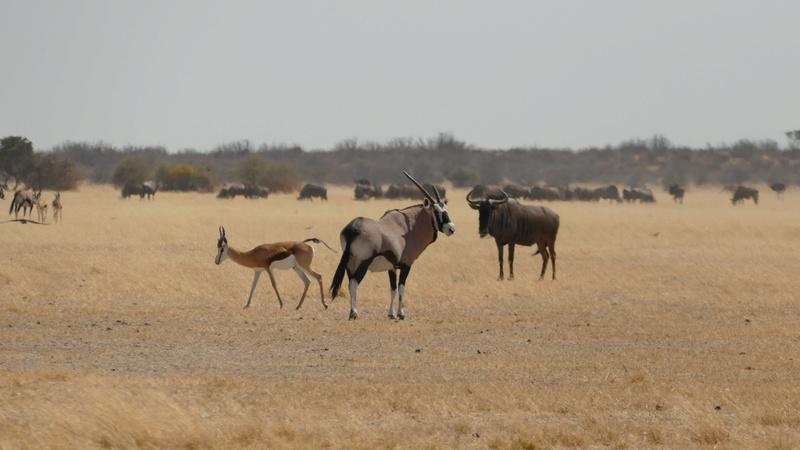 Namibie Août 2016 P1090615