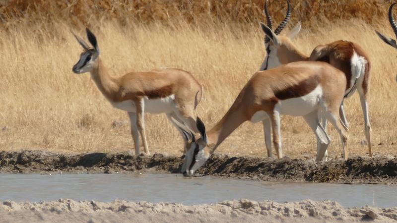 Namibie Août 2016 P1090617