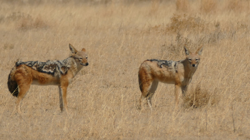 Namibie Août 2016 P1090619