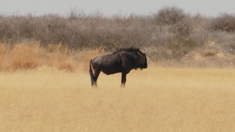 Namibie Août 2016 P1090620