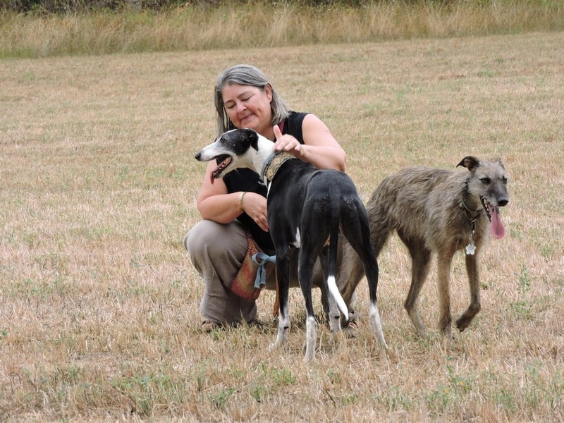 Careta grande galga noire et blanche, bientôt 6 ans.Scooby France  Adoptée  - Page 5 Dscn4915