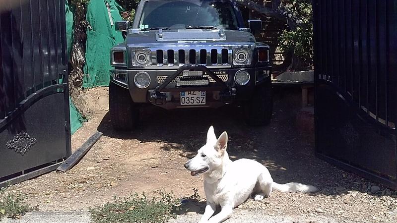 Photos de votre Hummer & animal de compagnie - Page 2 Cam00510