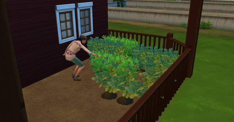 [Challenge Jardin-Ecolo-Sims] Les Laterre ! 09-07-47