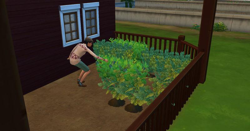 [Abandon] Challenge Jardin-Ecolo-Sims : Les Laterre ! 09-07-47