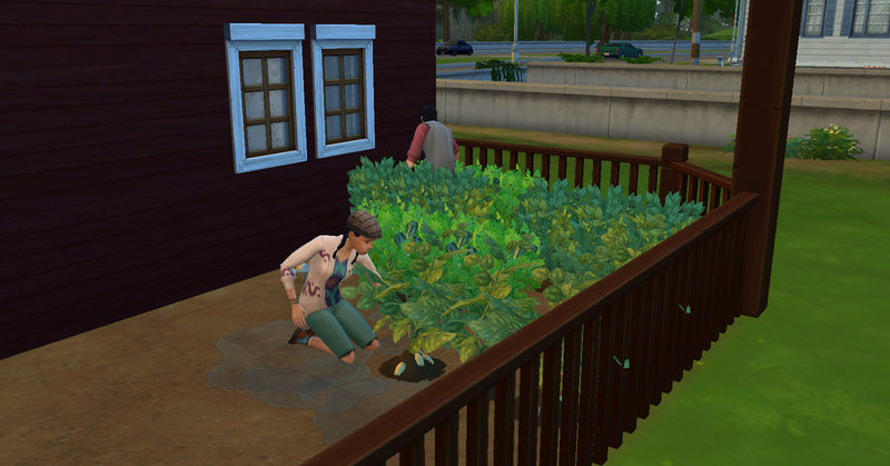 [Challenge Jardin-Ecolo-Sims] Les Laterre ! 14-08-12