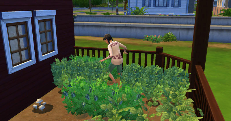 [Challenge Jardin-Ecolo-Sims] Les Laterre ! 23-07-25
