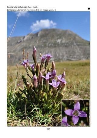 Orchidee spontanee d'Abruzzo Guida_10