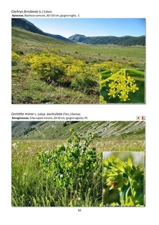Orchidee spontanee d'Abruzzo Guida_12