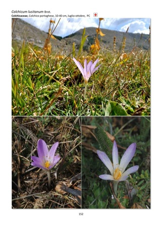 Orchidee spontanee d'Abruzzo Guida_13