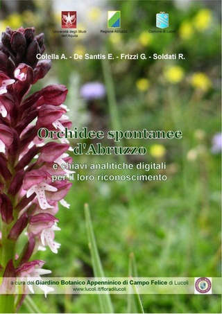 Orchidee spontanee d'Abruzzo Orchid10