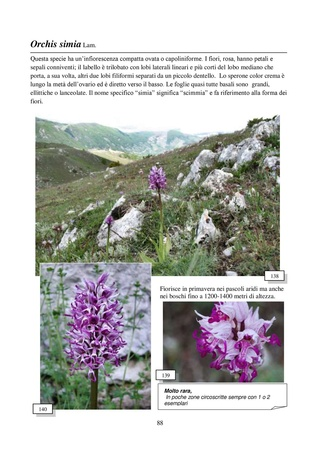 Orchidee spontanee d'Abruzzo Orchid12
