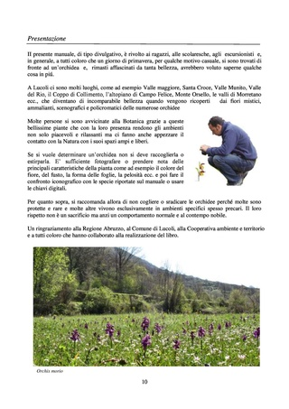 Orchidee spontanee d'Abruzzo Orchid13