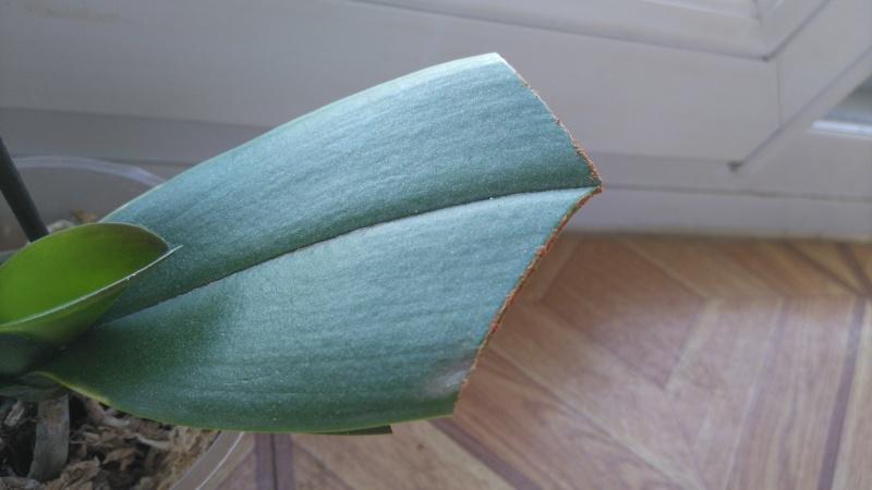 couleur des feuilles - Page 3 Dsc_0143
