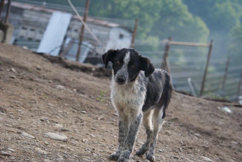 FANTA, chiot mâle, né en mars 2016 - (Pascani) - REMEMBER ME LAND - décédé Dsc_0411