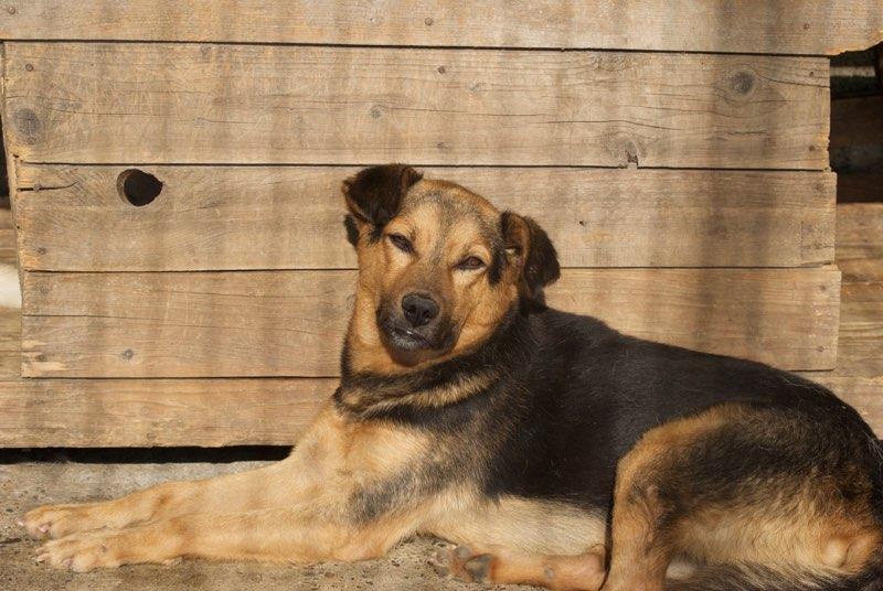 ZERO (ex POLO)  !! + de 3 ans de box !! mâle croisé, né environ en mars 2010, taille moyenne - REMEMBER ME LAND -  adopte par Sarah (Belgique)  Dsc_0466