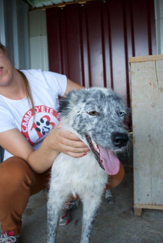 LILI-BLUE (ex BLUESKY),  femelle, sourde aux yeux vairons croisée nordique, taille moyenne, née en 2013(Pascani)- adoptée par Sabrina (34) Dsc_0531