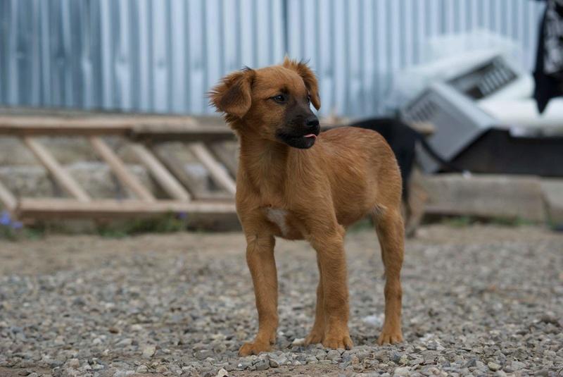 PRALINE- chiot femelle- née en mai 2016 - adoptée en Roumanie Recei130