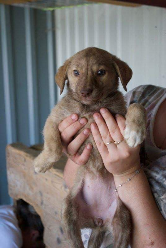 BADOIT- chiot femelle- née en juin 2016- REMEMBER ME LAND -DCD Recei170