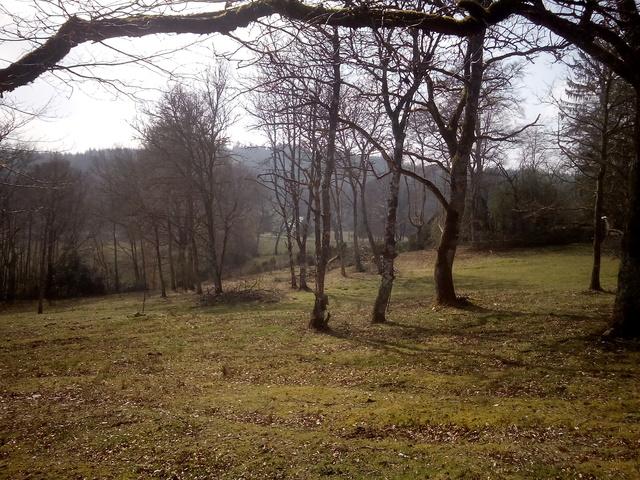 MAISON BOIS ECOLOGIQUE - terrain 4 ha + abri chevaux et grange pierre Terrai10