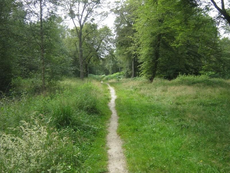 Petit tour en forêt régionale de Grosbois (94) Img_4521