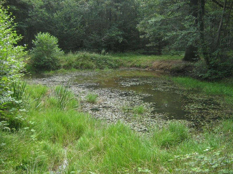 Petit tour en forêt régionale de Grosbois (94) Img_4522