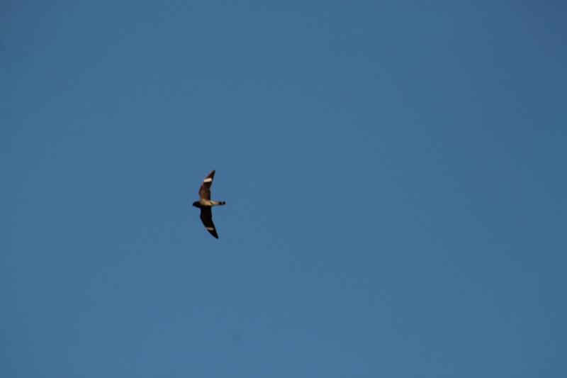 Je ne connais vraiment pas cet oiseau la .....de l'aide s.v.p. Img_8512