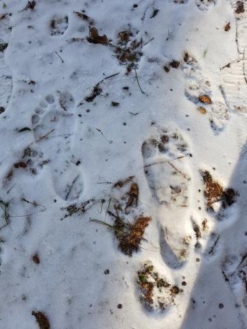 Sulla neve e oltre ... 20190116
