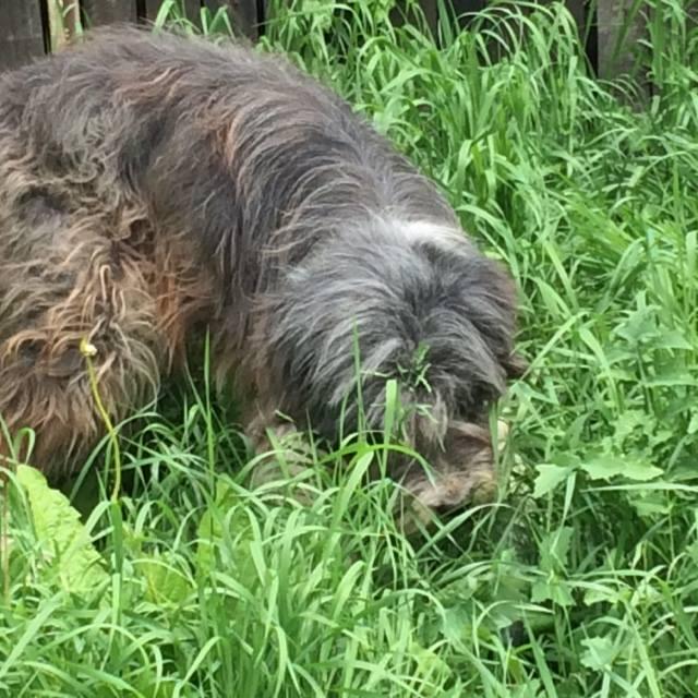 Arrivée de chiens d'ORASTIE LE DIMANCHE 12 JUIN 2016 vers midi à Amance (54) - Page 3 13417612