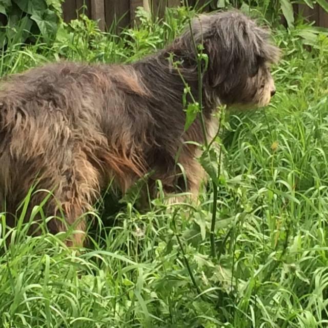 Arrivée de chiens d'ORASTIE LE DIMANCHE 12 JUIN 2016 vers midi à Amance (54) - Page 3 13434812