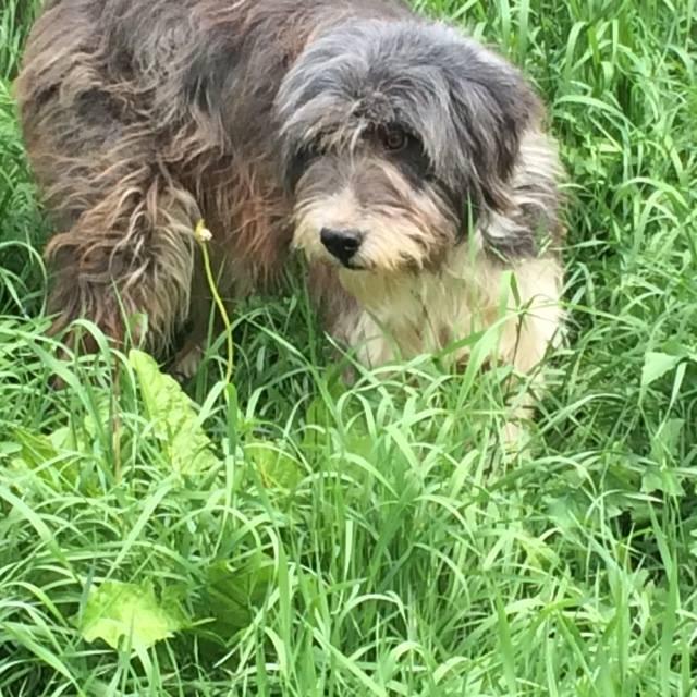 Arrivée de chiens d'ORASTIE LE DIMANCHE 12 JUIN 2016 vers midi à Amance (54) - Page 3 13445412