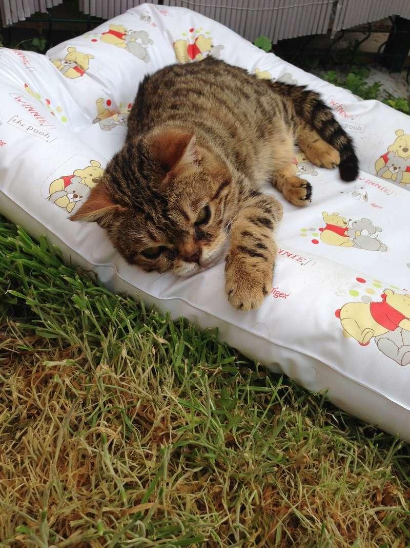 Week-end Handi'cats 00510