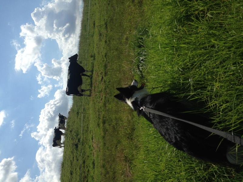 troupeau - Conseils avant de commencer le troupeau Img_3410