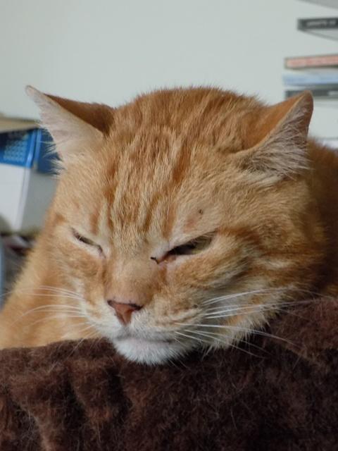 Garfield, Mâle européen (01/01/2007) - FIV+ - Page 7 Dscn6138