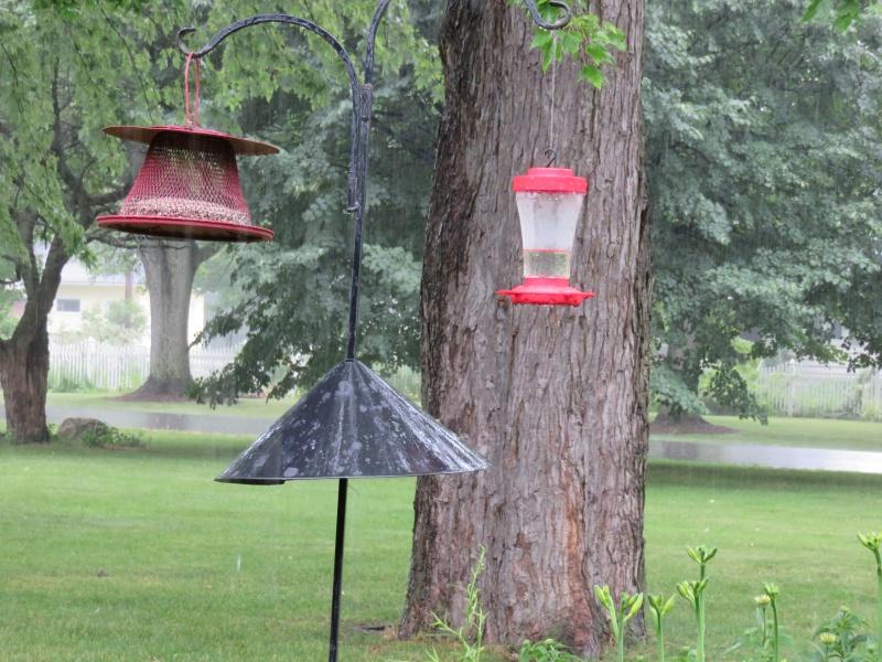 Birds of the Garden Image40