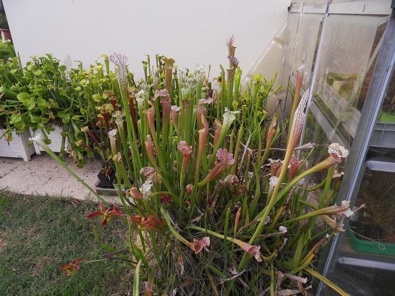 Les Leucophylla Sdc16431