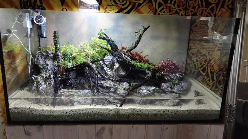 Aquascaping 90x45x45 Img_2014