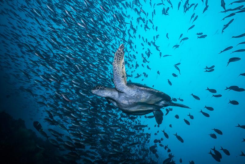 Galapagos 2016 Dsc02111