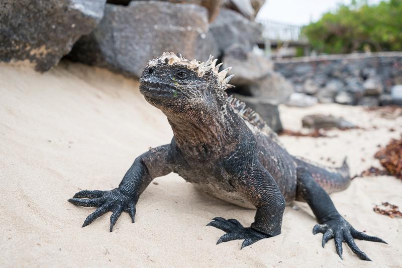 Galapagos 2016 Dsc02410