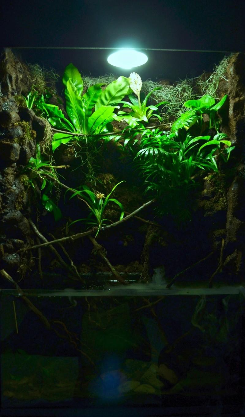 Paludarium amazonien  - Page 2 Dsc_9411