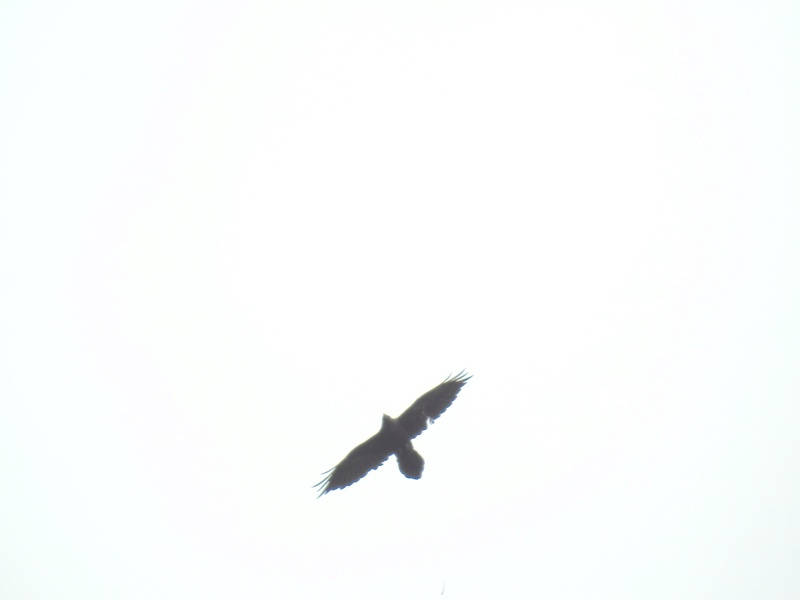 Oiseau de proie Image50