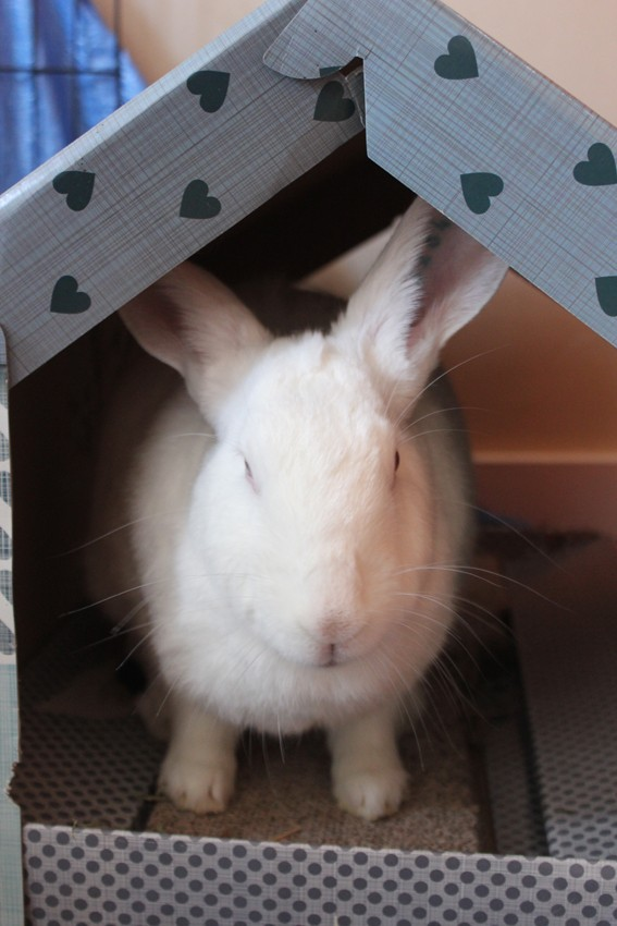 [ADOPTEE] Acacia, lapine de laboratoire à adopter 110