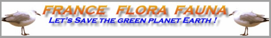 France Flora Fauna Fff10