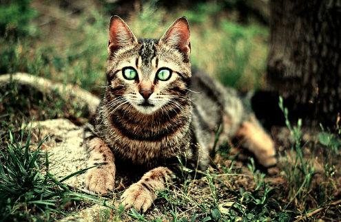 Let me dream - Chant de la Louve Cat_s_10