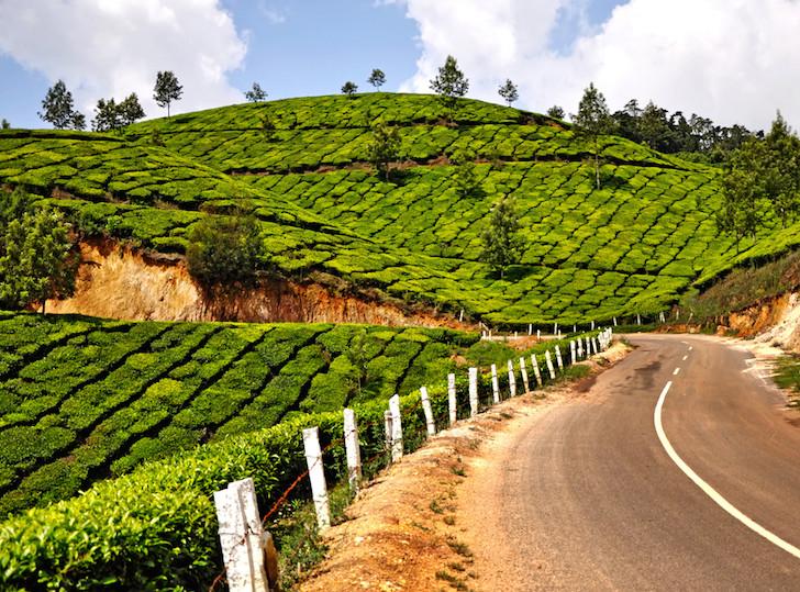 L'Inde prévoit de planter 2 milliards d'arbres, l'effet que cela aura est incroyable  Inde10