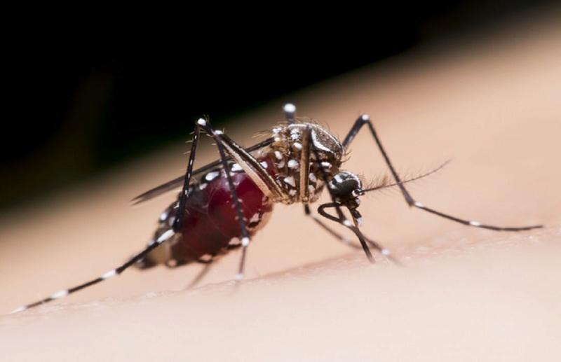 Pourquoi les Moustiques piquent certaines personnes et pas d'autres…! Mousti10