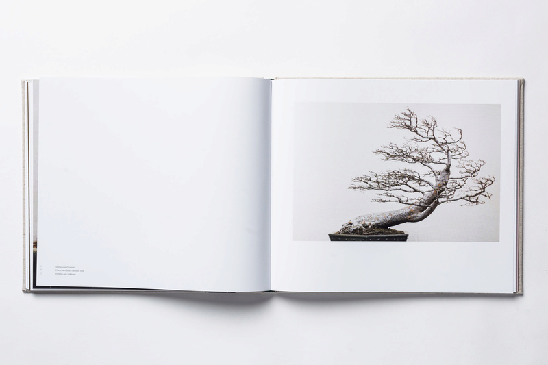 In Training, a new book of bonsai photos, out now (and discounted on Amazon) Intrai10