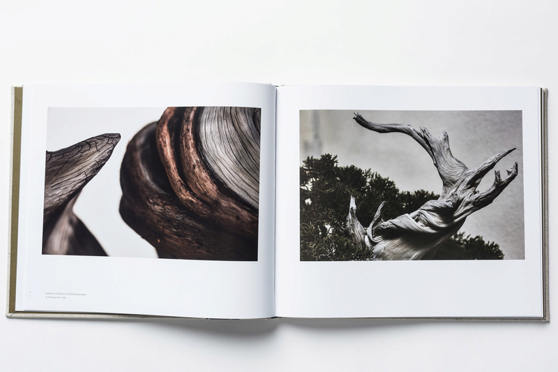 In Training, a new book of bonsai photos, out now (and discounted on Amazon) Intrai11